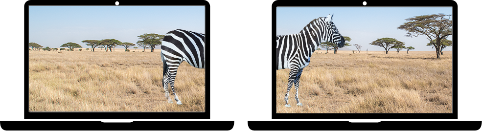 Zebra image file sent from one person's laptop to another